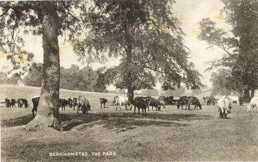 The Park, Berkhamsted Place, Hertfordshire