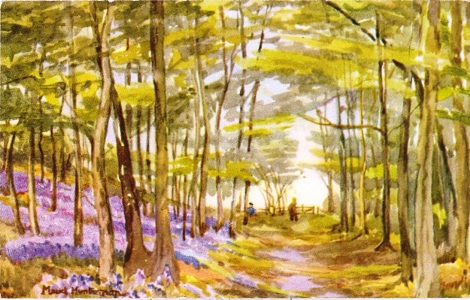 Bluebells in Philipshill Wood, by Maud Huntsman
