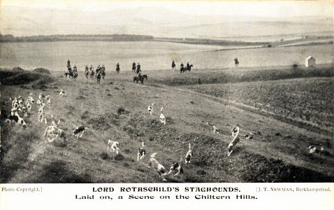 Lord Rothschild's Staghounds hunting in the Chiltern Hills, post card by J T Newman, Berkhamsted