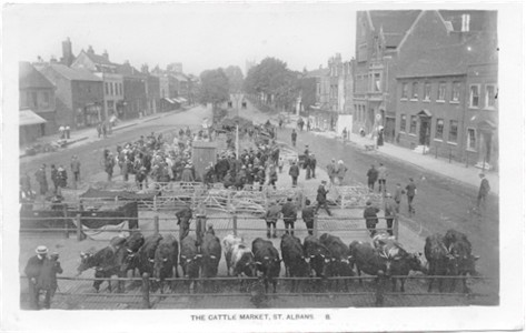 Title: The Cattle Market, St Albans - Publisher: Lillywhite Series No. 8 - Manuscript note on back says April 4, 1915.
