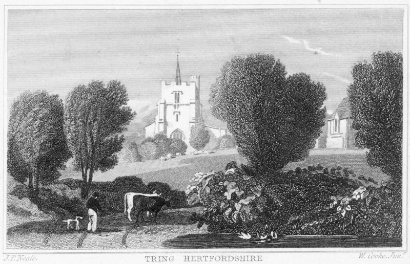 Engraving by Neale & Cooke of Tring Church
